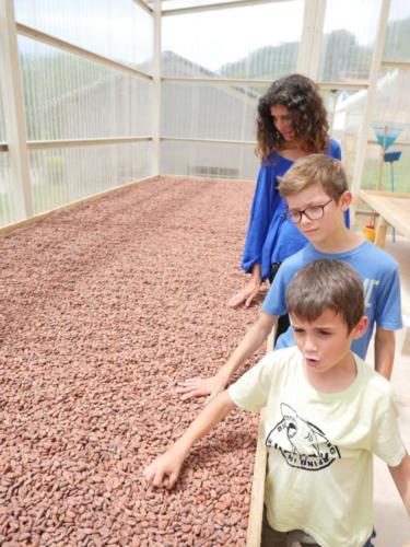 Séchage Cacao sous serre à 45C, Apodip