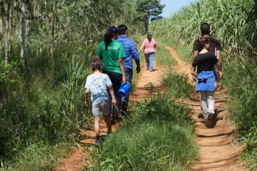 Sur les chemins de canne à sucre
