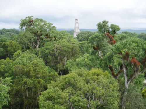 Surgi de la forêt, Tikal