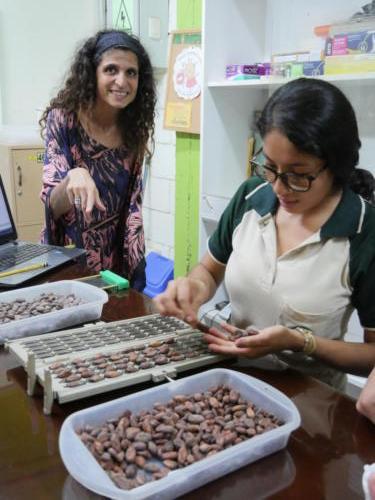 Test à la coupe fève cacao