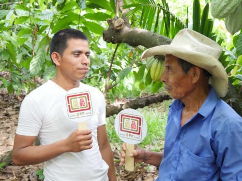 Transmission père fils, producteurs cacao, Apodip