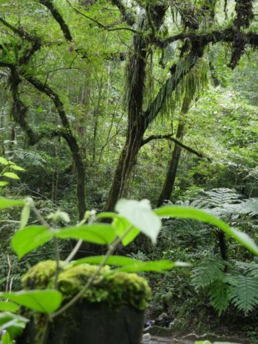 Végétation luxuriante Las Canadas