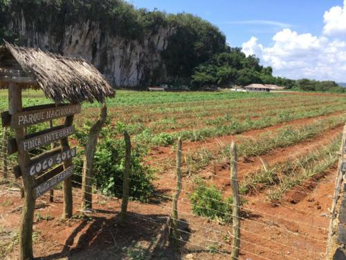 Visite Ferme Agroécologique à Vinales