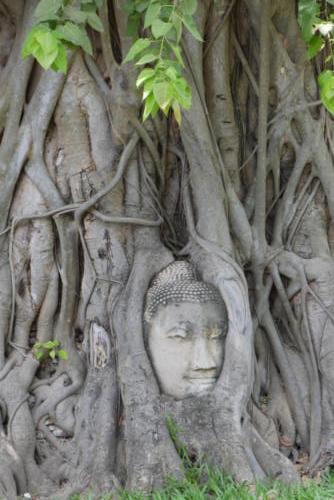 Wat Maha That, Ayutthaya (5)